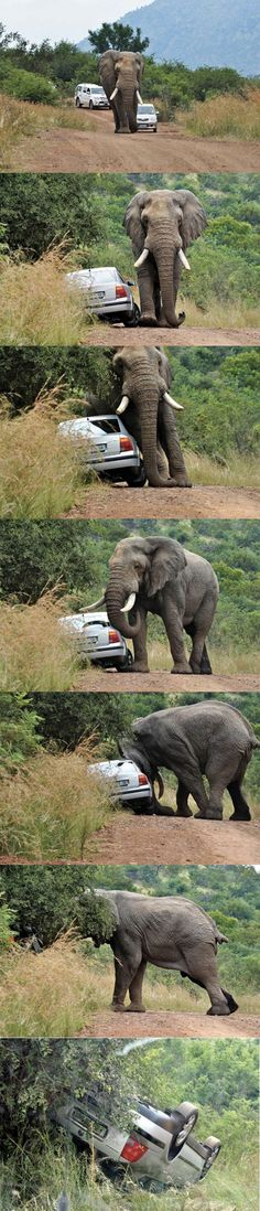 Never honk at an elephant