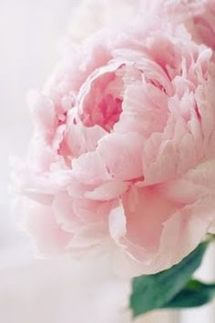 One of my favorite flowers. http://postandgrant.com/