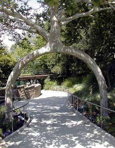 boom2-480x620 Bijzondere bomen tegen de najaarsdip