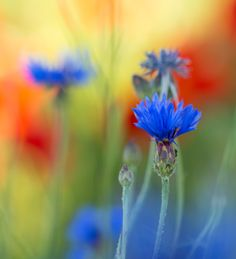 The colors of the summer by Irén Udvarházi on 500px