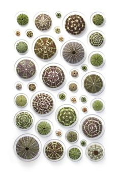The Art of Biophilia: Extraordinary Mosaics Incorporating Earth's Most Colorful Creatures – Brain Pickings Patterns In Nature, Textures Patterns, Christopher Marley, Sea Plants, Macro And Micro, Organic Art, Elements And Principles, Still Photography, Shell Crafts