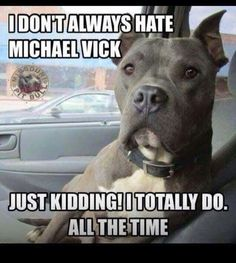 I don't always hate Michael Vick - humorous pit bull