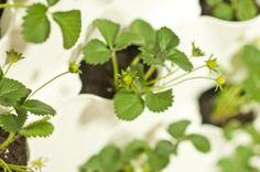 ideas | Cuidado de Plantas