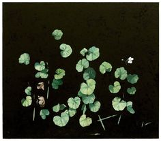 Glenn Sorensen (Australian, b. active in Sweden), My Nine, Oil on canvas, 70 x 80 cm. Botanical Illustration, Illustration Art, I'm A Believer, Australian Artists, Outsider Art, Contemporary Paintings, Garden Plants, Planting Flowers, Oil On Canvas