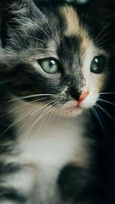 When a furry baby is more photogenic than me...