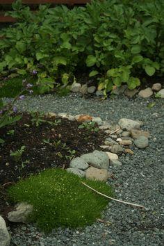 Potager style vegetable garden