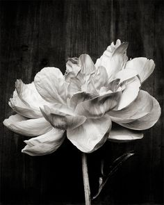 Botanical Black and White No. 5793 by Kari Herer Photography on Etsy