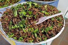 Large-scale edible insect farming needed to ensure future global food supply