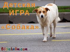 детская игра Собака! Dogs, Animals, Animales, Animaux, Doggies, Animal, Animais, Dieren, Pet Dogs