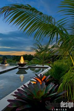 """Reflecting pond in a garden designed by the New Zealand firm, Shafer Designs. The slate tiles are from Bali (we're not in Kansas anymore!) and the bromeliad in the foreground is Alcantarea imperialis 'Rubra'. """"Simplicity, clarity, and structure"""" is. Swimming Pool Designs, Swimming Pools, Picture Places, Landscape Architecture Design, Peaceful Places, Pool Water, Tropical Houses, Outdoor Areas, Garden Design"""