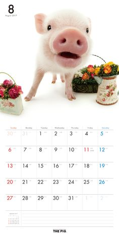Introducing Artlist Collection animal calendars such as THE PIG, THE RABBIT, THE FERRET, THE HAMSTER, THE FROG, THE BIRD and THE OWL. All pages of the latest calendars are available for browse.