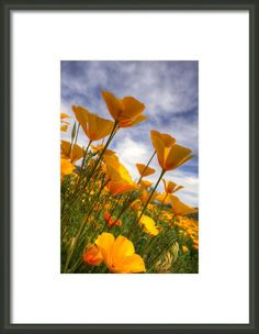 Paint The Desert With Poppies  Framed Print By Saija  Lehtonen