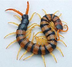 9 Best Centipedes & Millipedes images | Centipedes