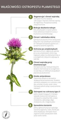 Slim Body, Woman Painting, Natural Medicine, Natural Health, Natural Remedies, Health Tips, Herbalism, Garden Design, Healthy Lifestyle