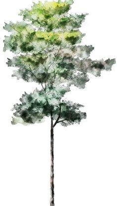 Silueta árbol 6