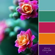 Discover Color - вдохновение цветом | ВКонтакте
