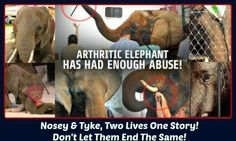 Nosey & Tyke, Two Lives One Story! Don't Let Them End the Same!