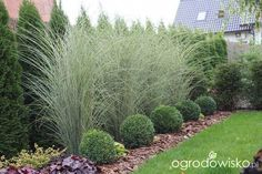 Beautiful ideas for landscaping with ornamental grasses used as an informal grass hedge, mass planted in the garden, or mixed with other shrubs and plants. trees privacy landscaping ideas Landscaping with Ornamental Grasses Privacy Landscaping, Outdoor Landscaping, Front Yard Landscaping, Outdoor Gardens, Landscaping Design, Landscaping Software, Landscaping Contractors, Arborvitae Landscaping, Privacy Plants