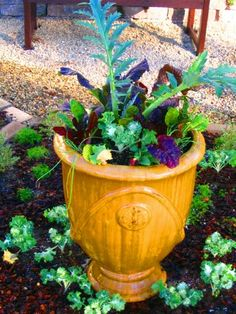 lettuce and artichoke in beautiful urn...would make nice front yard edible landscaping
