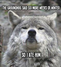 Funny pictures about Scumbag groundhog. Oh, and cool pics about Scumbag groundhog. Also, Scumbag groundhog. Funny Animal Pictures, Funny Animals, Cute Animals, Funniest Pictures, Animal Pics, Animal Quotes, Animal Memes, Animal Funnies, Timberwolf