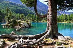 Какво е родословното дърво и за какво трябва да познаваме нашата фамилна история? - https://www.diana.bg/kakvo-e-rodoslovnoto-darvo-i-za-kakvo-tryabva-da-poznavame-nashata-familna-istoriya/