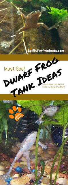 Must See! African Dwarf Frog Tank Ideas. (You'll Never Look At Fish Tanks The Same) Way Again) Happy Animals, Animals For Kids, Cute Animals, African Frogs, Dwarf Frogs, Frog Habitat, Frog Tank, Frog Terrarium, Pet Frogs