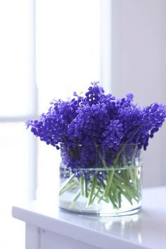 I'm already looking forward to the grape hyacinth bulbs that I planted to come up in the spring.