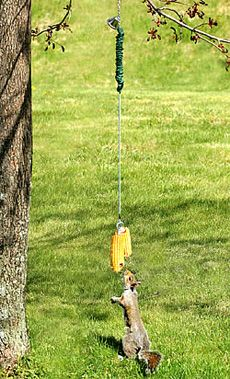bungee jumping squirrel feeder - my dad would get a KICK out of this