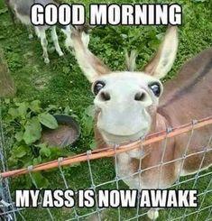 Good Morning, Donkey ! ☉