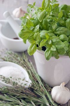 BasilLove!..being my favorite herb ..lovelovelove !