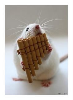 hamster tattoo - Ten Amazing Pictures of Rats Playing Musical Instruments Mouse Photos, Mouse Pictures, Animal Pictures, Funny Pictures, Funniest Pictures, Funny Mouse, Cute Mouse, Rats Mignon, Funny Animals