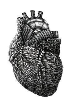 Unbelievably ornate anatomical drawings by Latvia-based illustrator Alex Konahin.  He is a master with a dip nib pen!