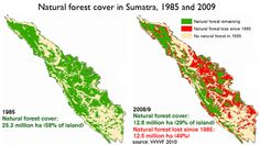 Indonesia's Environment Ministry is suing forest destroyers APP and APRIL 225 billion dollars for their illegal logging.    This should be a HUGE story, but it's not getting much attention. Share it please!