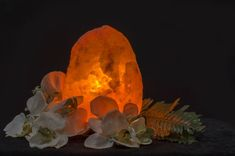 If you want to test the reported healing powers of salt lamps for yourself, we have a wide selection of options. At Himalayan Salt Lamps UK, we offer the best quality salt lamps in the UK. Pink Salt Lamp, Salt Rock Lamp, White Himalayan Salt Lamp, Himalayan Salt Benefits, Healing, Allergies, Lamps, Medium, Painting