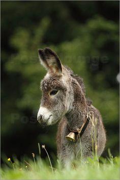 Uwe Fuchs - kleiner Esel
