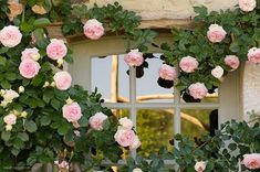 In front if house? Pink Day, Old Rose, Shabby, Climbing Roses, Rose Cottage, Antique Roses, Plantation, Garden Gates, Garden Inspiration