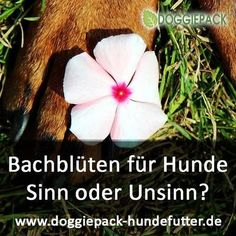 Bachblüten für Hunde – jeder hat es schon einmal gehört und in jedem Tiergeschäft kann man Bachblüten-Produkte erwerben. Aber was ist das eigentlich für eine Therapieform und wirkt sie überhaupt? Edward Bach – Entdecker der Bachblüten Die Bachblüten-Therapie für Tiere wurde aus der Therapie für Menschen, entwickelt von ihrem Namensgeber Dr. Edward Bach (1886 – 1936), abgeleitet. Der Arzt, Immunologe … Alternative Heilmethoden, Tricks, Your Dog, Dandelion, Dogs, Flowers, Plants, Fit, Natural Home Remedies