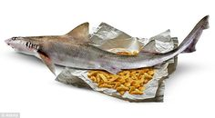 There are fears many restaurateurs are unaware they could be selling shark disguised as popular fish dishes having bought produce which has ...