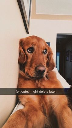 """17 """"Feeling Cute"""" Animal Selfie Memes That Have Been Bestowed Upon The Public - World's largest collection of cat memes and other animals Cute Little Animals, Cute Funny Animals, Funny Dogs, Funny Memes, Cute Dogs And Puppies, I Love Dogs, Doggies, Puppies Puppies, Cute Creatures"""