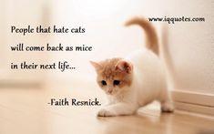 cat-quotes (2)