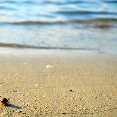 pasir pantai berhala island