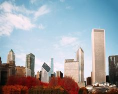 Fall Photography in Chicago Millennium Park Chicago Photography, Autumn Photography, Fine Art Photography, Forest Preserve, Chicago City, Historical Architecture, Lake Michigan, Park City, Seattle Skyline