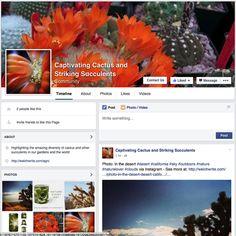 Cactus suculent fb