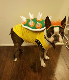 Bowser dog costume