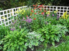 Rehevä perennapenkki Curb Appeal, Garden Plants, Outdoor Structures, Landscape, Patio, Flowers, Landscaping Ideas, Garden Ideas, Gardening