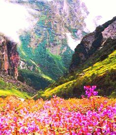 Valley of Flowers National Park,Uttarakhand, India:
