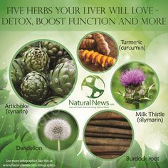 Five Herbs Your Liver Will Love http://www.naturalnews.com/Infographic-Five-Herbs-Your-Liver-Will-Love.html