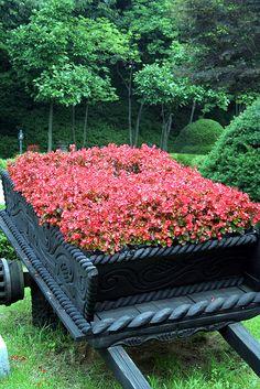 flower in a wagon