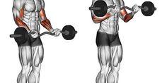 Rosca 21s do Arnold para bíceps, como usar em seu treino?