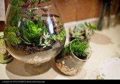 Great succulent terrarium